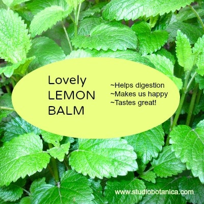 1000  ideas about Lemon Balm Uses on Pinterest | Herbs, The Herbs ...