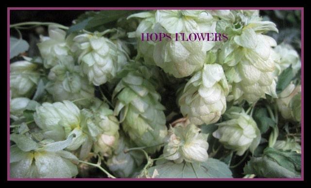 Herbs for better sleeps - Studio Botanica
